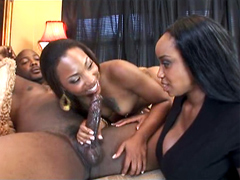 Hot ebony pornstar Roxy Reynolds grabbed her boyfriend's big cock and started sucking it,..